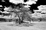 Awesome South Africa Collection B&W - Trees in the African Savannah III