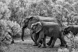 Awesome South Africa Collection B&W - Family of Elephants