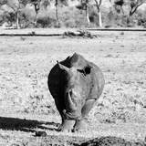 Awesome South Africa Collection Square - Black Rhino B&W