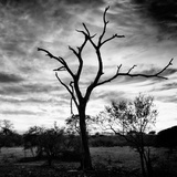 Awesome South Africa Collection Square - Silhouette of Acacia Tree B&W