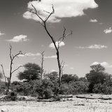 Awesome South Africa Collection Square - Savannah Landscape V