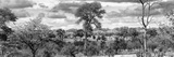 Awesome South Africa Collection Panoramic - Beautiful Savannah Landscape III B&W