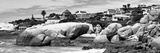 Awesome South Africa Collection Panoramic - Boulders Beach View II B&W