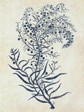 Indigo Blue Seaweed 3 c