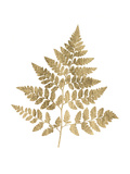 Graphic Gold Fern I