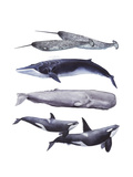 Whale Stack II