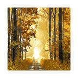 Sunlit Forest I