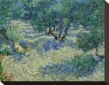 Olive Orchard, 1889
