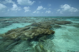 Coral Reef, Lighthouse Reef, Atoll, Belize