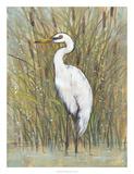 White Egret I
