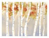 Swaying Birches II