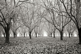 Tree Grove Pano BW I