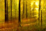 Sunny Deciduous Forest in Full Autumn Colours, Abstract Study [M