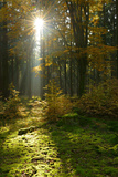 Sunrays and Morning Fog, Mixed Forest in Autumn, Harz, Near Allrode, Saxony-Anhalt, Germany