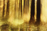 Sunny Deciduous Forest in Full Autumn Colours, Abstract Study [M], Film Grain Visible