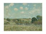 Meadow, 1875