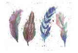 Natures Feathers