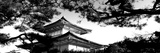 Low Angle View of Trees in Front of a Temple, Kinkaku-Ji Temple, Kyoto City, Kyoto Prefecture