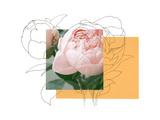 Floral Contour 2