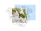 Floral Contour 1