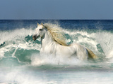 Dream Horses 091