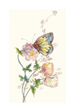 Butterfly Design 2