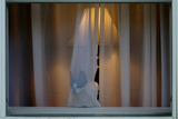 Cat Behind Window Curtain
