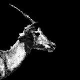 Low Poly Safari Art - Antelope Profile - Black Edition II