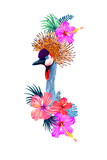 Crowned Crane Vector Illustration