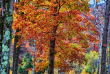 Autumn Color As Paint, New Hampshire, New England Fall
