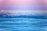 Pink Sunrise Morning Light and San Francisco in Fog Cityscape Urban