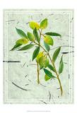 Olives on Textured Paper I