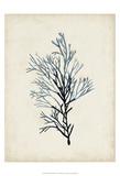 Seaweed Specimens IV