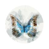 Indigo Butterfly II