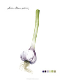Root Vegetable I