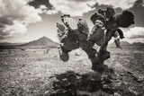 !Viva Mexico! B&W Collection - Cactus in the Mexican Desert II
