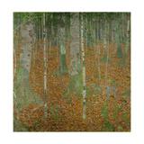 Buchenwald (Beech trees). Oil on canvas (1903). Giclée-Druck von Gustav Klimt