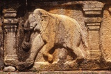 Elephant Frieze on Base of Audience Hall, Polunnaruwa, Sri Lanka, 20th century Valokuvavedos tekijänä Unknown,