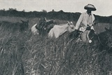 'Travel on the Pampas', 1916 Photographic Print by  Unknown