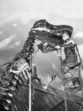 Man Working on Skeleton of a Tyrannosaurus at the American Museum of Natural History Fotografie-Druck von Hansel Mieth