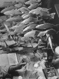 American Museum of Natural History Artist Brunner Working on Plaster Molds Made from Real Fish Lámina fotográfica por Margaret Bourke-White