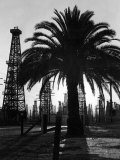Billowing Palm Tree Gracing the Stark Structures of Towering Oil Rigs Lámina fotográfica por Alfred Eisenstaedt