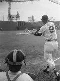 Ted Williams Batting at Fenway Park Reproduction photographique Premium par Ralph Morse