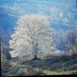 The River Fotografisk trykk av John Dominis