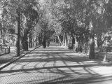 Avenue of Cypress in Central Park Impressão fotográfica por Dmitri Kessel