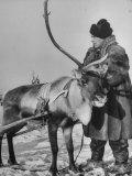 Lapp Tribesman Tending to His Reindeer Photographic Print by Mark Kauffman