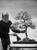 Keibun Tanaka Brushing Away Fallen Leaves of a Bonsai Maple Tree in Garden, Suburban Tokyo Premium Photographic Print by Alfred Eisenstaedt