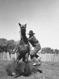 Cowboy Mounting a Horse Lámina fotográfica por Carl Mydans