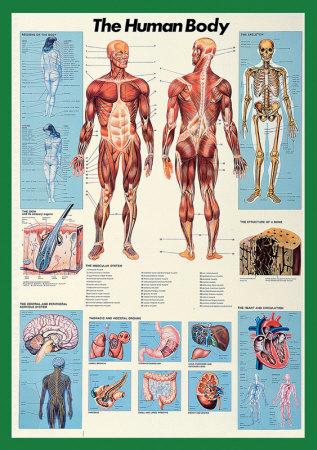 Lidské tělo Plakát