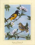 Beauty of Nature II Poster von Darryl Vlasak